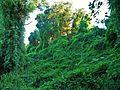 Zona natural protegida de la senda del Duero.jpg