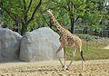 Zoo de Vincennes, Paris, France April 2014 (7).jpg