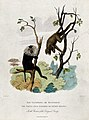 Zoological Society of London; a wandaroo and a langur climbi Wellcome V0023150.jpg