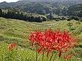 (千葉県) 大山千枚田。東京に一番近い棚田として有名です。彼岸花が、非常に力強い赤で印象的でした。この棚田、江戸 - panoramio.jpg