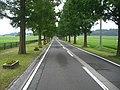 (滋賀県) メタセコイヤ並木。ちょっと行けば福井県。 - panoramio.jpg