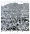 (1952) Fig.174 Typical bush country of Liberia.jpg
