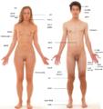 İnsan anatomisi.png