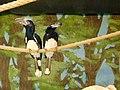 İpteki Kuşlar.jpg