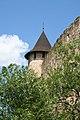 Башта фортеці і дерево.jpg