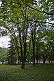 Біогрупа дерев у Кам'янець-Подільському.jpg