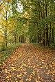 Гатчина. Аллея в Приоратском парке 2.jpg