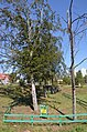 Група дерев бука лісового, парк «Перемога» 02.jpg