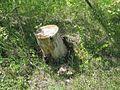Дендрологічний парк 170.jpg