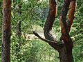 Дерево - panoramio (46).jpg