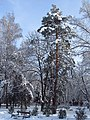 Зима в Ковалівському парку.jpg