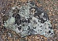 Камень покрытый мхом.jpg