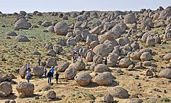 Конкреции в Западном Казахстане. Concretions. Western Kazakhstan.JPG
