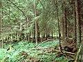 Лес в окрестностях Овиши - panoramio (1).jpg