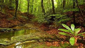Silkosiya Reserve - Image: Мързевски дол, с.Кондолово 03