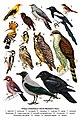 Птицы плавневых лесов Великого Луга.jpg