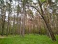Південна частина урочища Ялівщина, Чернігів.jpg