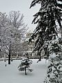 София - 21.01.2012 - panoramio (16).jpg