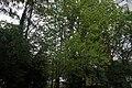 Тернопіль, заповідний куточок імені Миколи Чайковського.jpg
