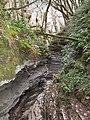 Тисо-самшитовая роща (300 га),1 км от Хосты вверх по течению реки, Хостинский район, Сочи.jpg