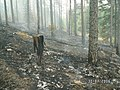 Тропа от пос. Канельярви .Холм . Низовой пожар 2006 . - panoramio - Dmitriy Alekseenkoff.jpg