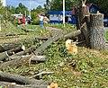 Уничтожение экологии в поселении Кокошкино.jpg