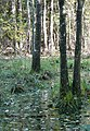 Фото путешествия по Беларуси 702.jpg
