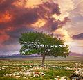 Шаман дерево.jpg