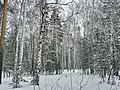 Шувакиш - panoramio (3).jpg
