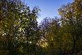 پاییزدر ایران-قاهان قم-Autumn in iran-qom 02.jpg