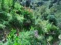 कलालपसे - panoramio (7).jpg