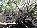 安平樹屋 Anping Tree House - panoramio (4).jpg