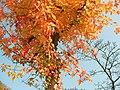 平成22年11月6日土曜日(2) - panoramio.jpg