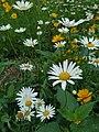 幸福城健康步道旁的花.jpg