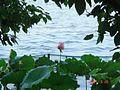 杭州.西湖-湖畔居 - panoramio.jpg