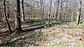 07 Grabhügelgruppe im Waldstück Hainbach.jpg