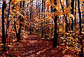 1997-10-bruce-trail-fall1.jpg