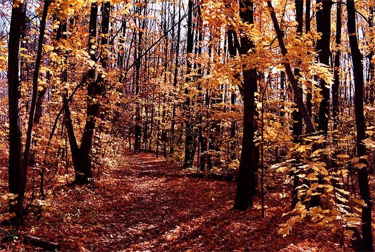 1997-10-bruce-trail-fall1