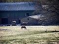 2007 01 27 14 36 08 - Winter in Tarbek - Schleswig-Holstein - Germany (31849914288).jpg