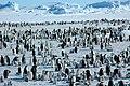 2007 Snow-Hill-Island Luyten-De-Hauwere-Emperor-Penguin-83.jpg