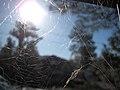 2009-365-135 A Web (3534138675).jpg