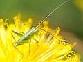 2011-04-18-insecte-6.jpg