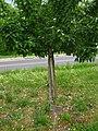 2011-04-27-193222 49,341066, 8,694224.JPG - panoramio.jpg