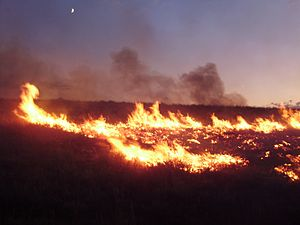 Elko County, Nevada - Lightning-sparked wildfires are common occurrences in Elko County.