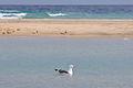 2012-01-14 14-59-43 Spain Canarias Jandía.jpg