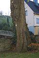 2012-10 Siddinghausen 8-Linden-Kirchhof 05.jpg