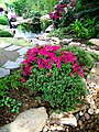 2012 kveten botanicka zahrada 059.JPG
