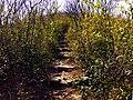 20130314湖州弁山通往山顶小径 - panoramio.jpg