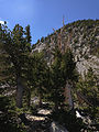 2014-09-15 11 22 28 View up the Bristlecone Trail and the Glacier Trail through sub-alpine forest in Great Basin National Park, Nevada.JPG