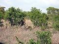 2014-11-23 050 Panthera leo anagoria.JPG
